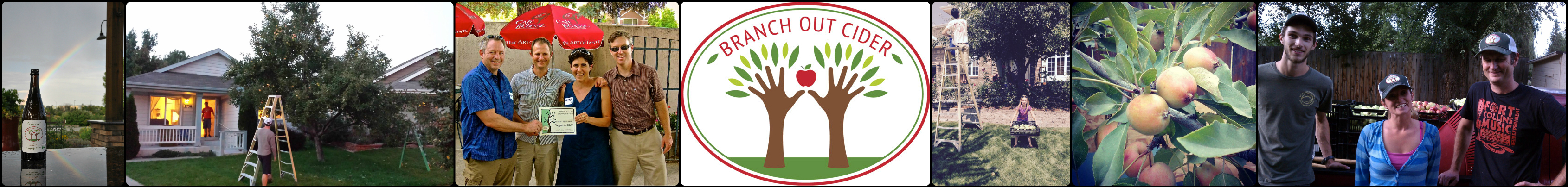 Branch Out Cider logo